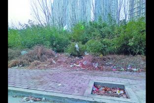 曝光台丨京开大道北段垃圾成患