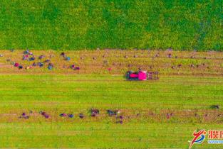 第3个中国农民丰收节掠影   庆丰收 迎小康