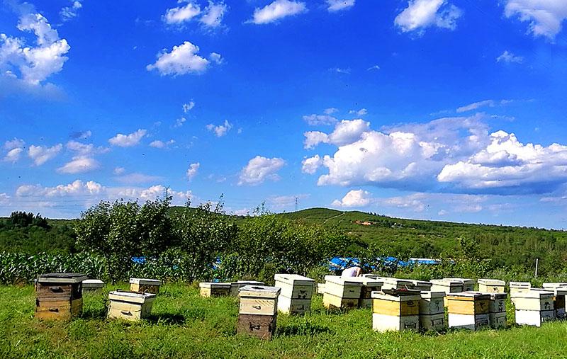 养蜂人的甜蜜与孤独