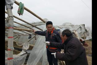 中原农险给大棚上保险 为农户遮风挡雨