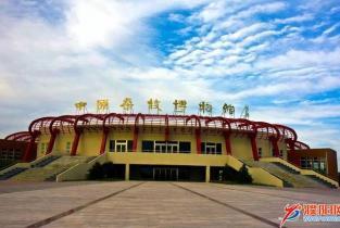 """政府提供免费车辆""""濮阳人游濮阳""""活动启动"""