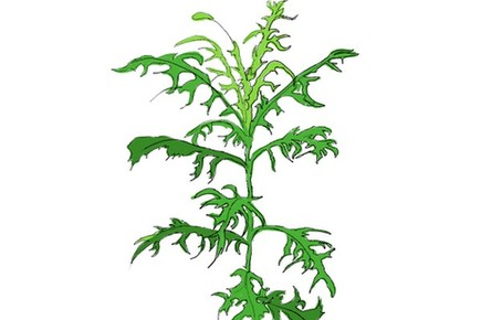 植物也能指示方向