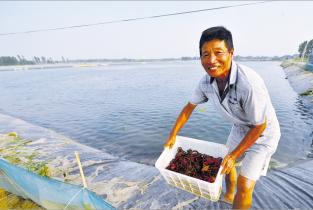 台前县打渔陈镇千亩小龙虾养殖基地助力脱贫